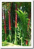 hanas-red-and-green-bamboo